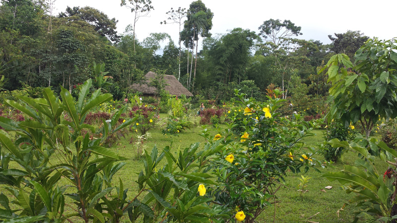 Town square in the jungle of Ecuador