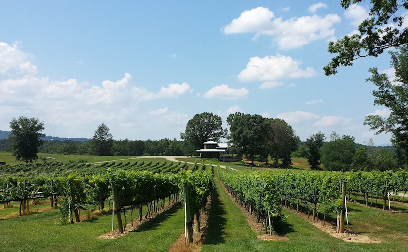 Nottely River Valley Vineyards view